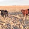 Exportaciones argentinas de carne vacuna cayeron 20%: Brasil aprovecha el momento para seguir ganando participación en el mercado global