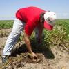El 8 de febrero comienza regir la obligación de gestionar un certificado digital para trasladar material de propagación vegetal