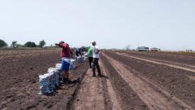 En el primer mes del aislamiento obligatorio se perdieron 2697 empleos en el sector agropecuario