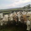 Empate técnico de Paraguay y Brasil en el mercado chileno de carne bovina: Argentina cada vez más relegada