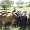 Paraguay volvió a ser el primer proveedor chileno de carne vacuna: acaparó casi el 43% del mercado luego de tres años de liderazgo brasileño