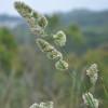 Se interrumpió la importación de pasto ovillo: el gobierno aplicó un arancel del 35% al ingreso de la semilla forrajera