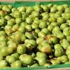 Disponen la suspensión de juicios de ejecución fiscal para productores patagónicos de peras y manzanas