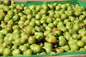 Extienden hasta mayo de 2019 la suspensión de juicios de ejecución fiscal para productores patagónicos de peras y manzanas