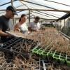 Argentinos involucrados en un caso de mala praxis de aplicación de fitosanitarios que perjudicó a productores hortícolas uruguayos