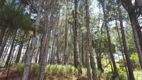 Burocracia mágica: el subsidio para bosques implantados en un rango de 301 a 500 hectáreas aumentó más de un 400%