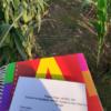 Mucho trabajo por delante: un estudio muestra que es muy baja la cantidad de refugios adecuados que se hacen en cultivos de soja Bt