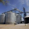 Operativo limpieza: el Senasa interviene el mercado de maíz pisingallo a pedido de las principales compañías exportadoras