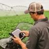 Se generalizaron los acuerdos de arrendamientos valorizados con el precio de la soja nueva: crecen los pagos a cosecha