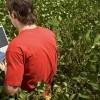 La publicación del precio de la soja pizarra Rosario volvió a tomarse vacaciones intermitentes: el disponible se trasladó a los mercados a término