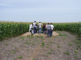 Alquileres agrícolas: la estructura del plazo de cobro es más importante que el valor negociado