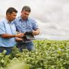Modificaron la norma que determina la registración obligatoria de operaciones de granos para asegurar la libertad comercial en el mercado disponible