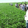 Alerta propietarios de campos de la región pampeana: sin la incorporación de maíz el cultivo de soja termina siendo inviable