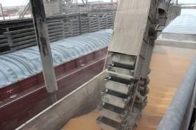 El piso no se perfora: la demanda real sigue sosteniendo los precios de los granos gruesos a pesar del pesimismo de los especuladores