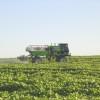 Córdoba: prohíben el 2,4D en formulaciones ésteres para uso en cultivos de verano