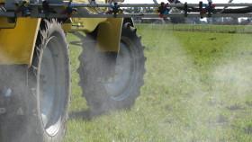 Argentina autorizó el evento de maíz tolerante al herbicida 2,4-D