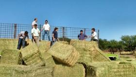 Agroindustria entregará hasta 900 kilos diarios de rollos a productores afectados por incendios