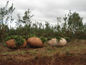 Paritarias rurales: el ajuste anual por inflación para los productores de yerba se determinó en 16,7%