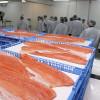 En lo que va del año las exportaciones chilenas de salmones superaron en más de un 200% a las colocaciones argentinas de carne bovina