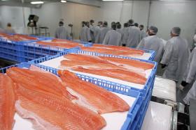 En 2016 las exportaciones chilenas de salmón superaron en 2400 M/u$s a las colocaciones argentinas de carne vacuna