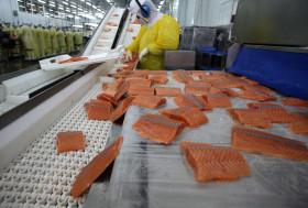 En lo que va del año las exportaciones chilenas de salmón superan 3,5 veces a las ventas argentinas de carne bovina