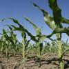 """Cuidado con presupuestar rindes altos en 2016/17: Aiello advirtió que """"el desarrollo de la cosecha gruesa va a sufrir algunos eventos de pulsos secos"""""""
