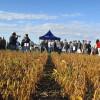 Los trabajadores dedicados a la producción de semillas son los mejor pagos en el sector primario con un salario promedio de 32.800 pesos