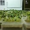 Alerta por semillas de soja con bajo poder germinativo: aconsejan realizar análisis tempranos para evitar sorpresas