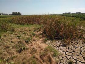 Las precipitaciones seguirán concentrándose en el norte del país: se profundiza la sequía en la zona pampeana