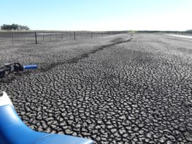 Con sequía pero solidarios: en el primer bimestre del año la zona pampeana transfirió regalías sojeras por más de 920 M/$ al resto del país