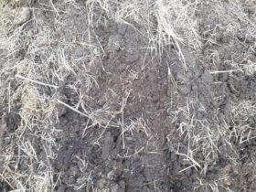 Entre Ríos ya es la primera provincia de la zona pampeana con la emergencia agropecuaria declarada por sequía