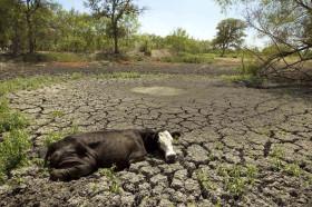 Por la sequía en el NOA en el último año Cresud liquidó más de 6300 cabezas de su rodeo de cría