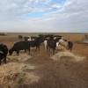 Santa Fe es la tercera provincia de la zona pampeana con la emergencia agropecuaria declarada por sequía