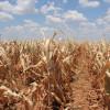 Los gobernadores de la zona pampeana no quieren saber nada con la sequía para evitar la declaración de la emergencia agropecuaria
