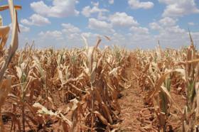 Córdoba es la segunda provincia de la zona pampeana con la emergencia agropecuaria declarada por sequía