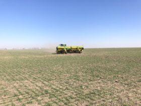 Alerta general: el sector norte de la principal zona agrícola argentina se encuentra en emergencia agropecuaria