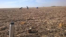 Carambola: gracias a la Asociación Semilleros Argentinos los productores podrán seguir haciendo uso propio en soja sin restricciones