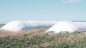 Liberaron compensaciones para sojeros del norte del país: hasta el momento se liquidó apenas un 4% del monto comprometido