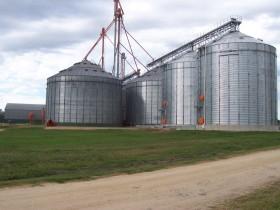 Récord histórico: el FOB teórico del trigo argentino vale un 120% más que el mejor cereal duro estadounidense