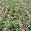 Argentina sigue siendo adicta a la soja: casi un tercio de las exportaciones de bienes se originan en el complejo oleaginoso
