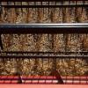 """La mayor parte de las ventas de soja se están realizando con la """"cláusula Bolsatech"""" ante la inacción oficial en el conflicto con Monsanto"""