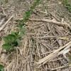 Los negocios de canje de soja aumentaron un 48% ante la imposibilidad de financiarse en pesos