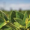 Ya es oficial: está vigente el programa de reducción progresiva de retenciones a la soja que comenzará en enero de 2018