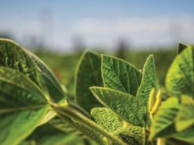 Alerta amarilla para el principal negocio agrícola argentino: el precio de la soja 2018/19 cayó por debajo de 235 u$s/tonelada