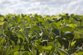 """Por los bajos precios de la soja se negociaron más """"seguros de precios"""" de compra que de ventas"""