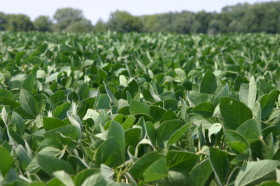 Los gobiernos provinciales se hacen adictos a la soja: en 2014 casi el 27% de la obra pública se financió con el Fondo Federal Solidario
