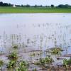 Los operadores especulativos comenzaron a apostar fuerte por una recuperación sustancial de los precios de la soja: prevén un desastre productivo en EE.UU.
