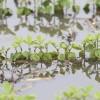 Vuelan los precios de la soja en Chicago: no aflojan las lluvias en las zonas productivas de EE.UU. afectadas por excesos hídricos
