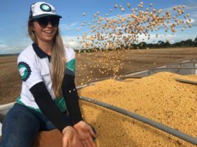 Escenario alcista: ¿Puede Brasil llegar a quedarse sin existencias de soja hacia fines del presente año?