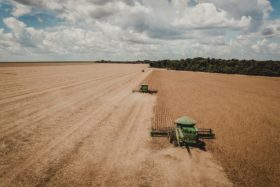 Fiesta comercial: el precio de la soja brasileña subió 50% en los últimos seis meses